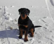 Home dog Penzion U lipy
