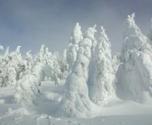 Winter Hochficht