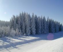 Winter Wald in Lipno