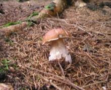 houby-3