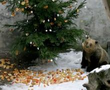 medvedi-v-ceskem-krumlove