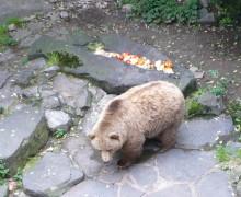 Medvědi v Českém Krumlvě
